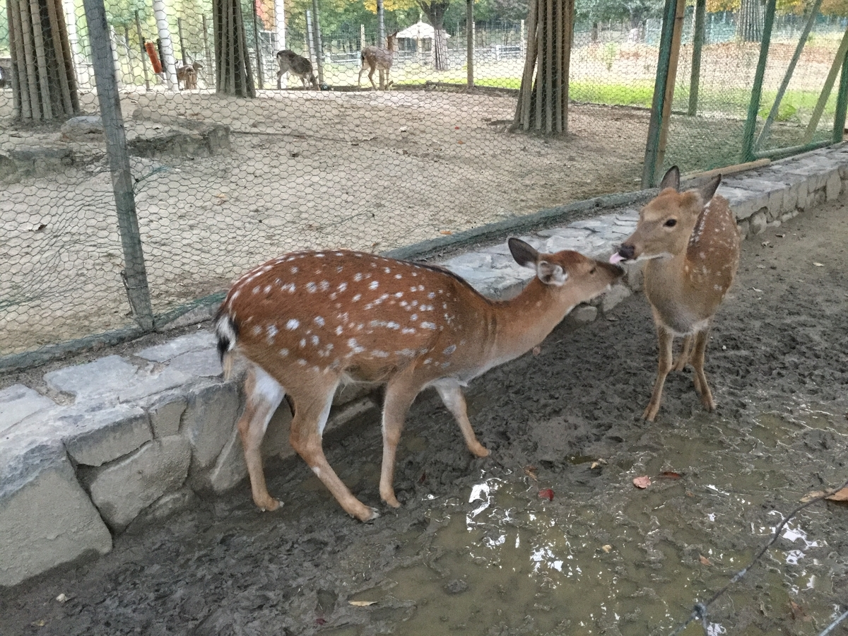 ソウルの森(서울숲)
