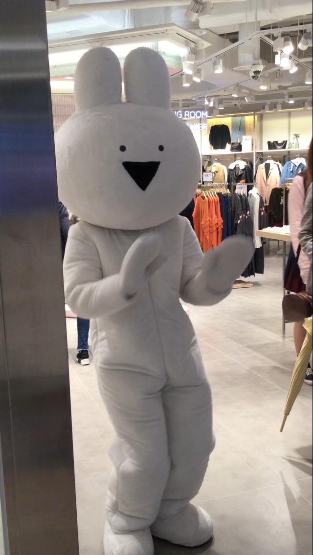 韓国 人気 すこぶる動くウサギ