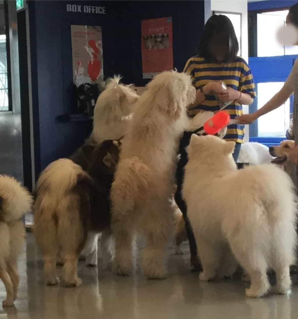 韓国カフェ 弘大 ホンデ 犬カフェ