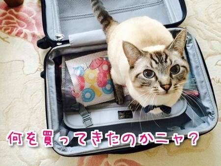 f:id:sansedaihawaii:20161028102352j:plain