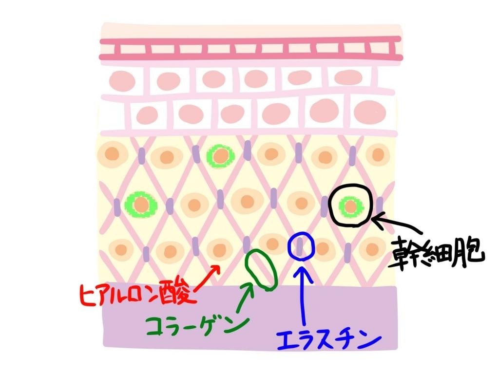 f:id:sanshinsu:20171028162456j:plain
