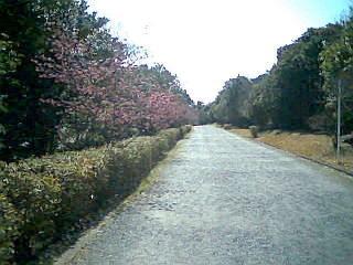 f:id:sanshu_seiso:20100319203155j:image