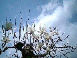 f:id:sanshu_seiso:20100320195045j:image
