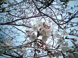 f:id:sanshu_seiso:20100331002938j:image