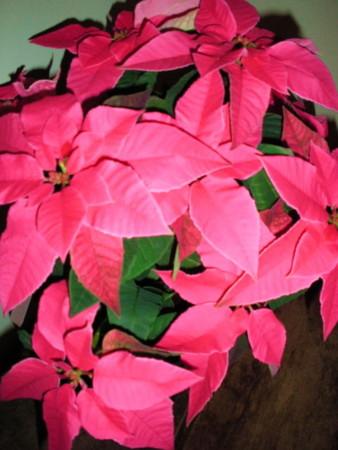 f:id:sanshu_seiso:20111115191019j:image