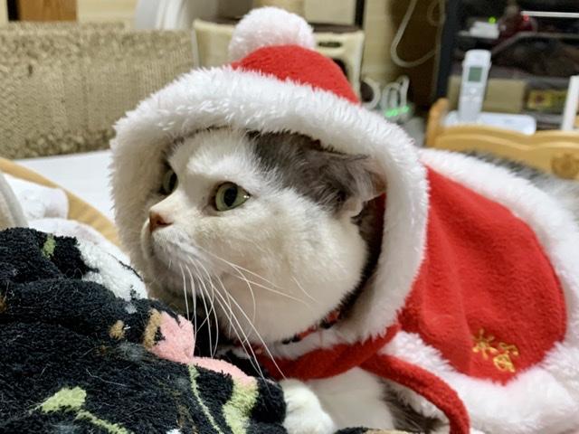f:id:santa-myuu:20191224224552j:plain
