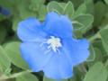 アメリカン・ブルー