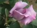 'Madame Violet'