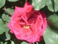'National Flower Guild'