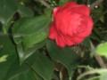 Matsukasa