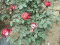 Osiria