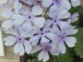 Jyanomegasa