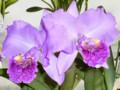 'Blumen Insel'