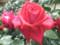 'Red Devil'