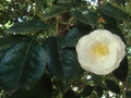 Nochiseyama
