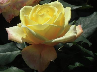 'Spek's Yellow'