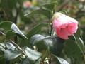 'Shibori-tarouan'