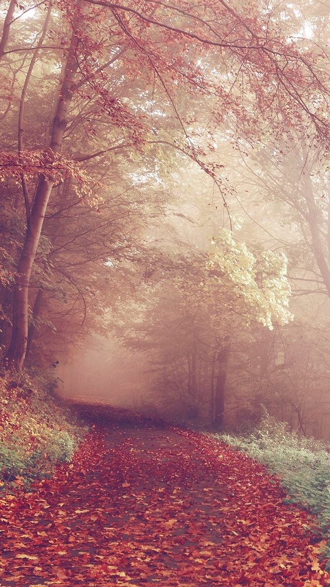 秋の森の道路の色が秋壁紙