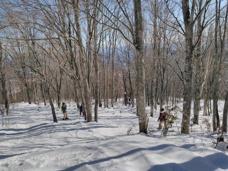 池の平温泉スキー場ツリーランコース