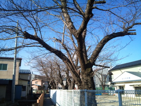 f:id:sanukimichiru:20111224103556j:image