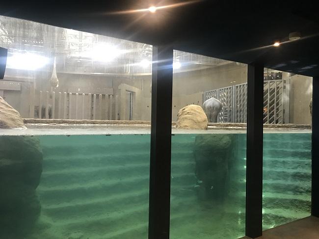 ゾウの室内プール