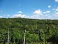 青い空と緑の畑、こんなにキレイ