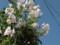 樹の電柱に花
