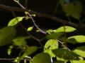 木漏日と逆光
