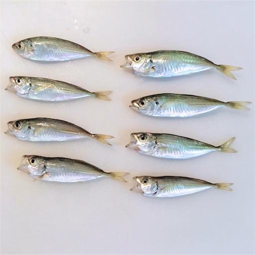 f:id:sardina:20170618162753j:image