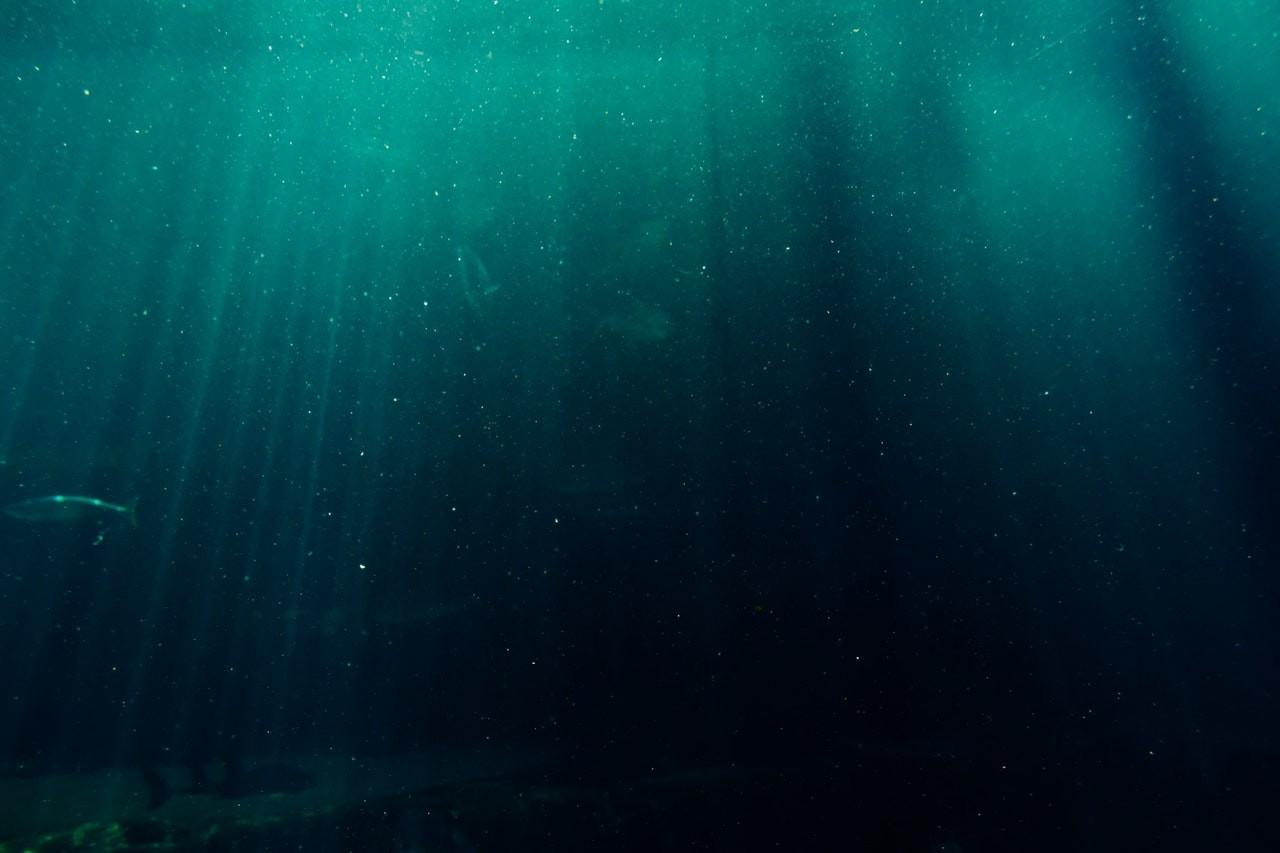 f:id:sardine:20180928014517j:image