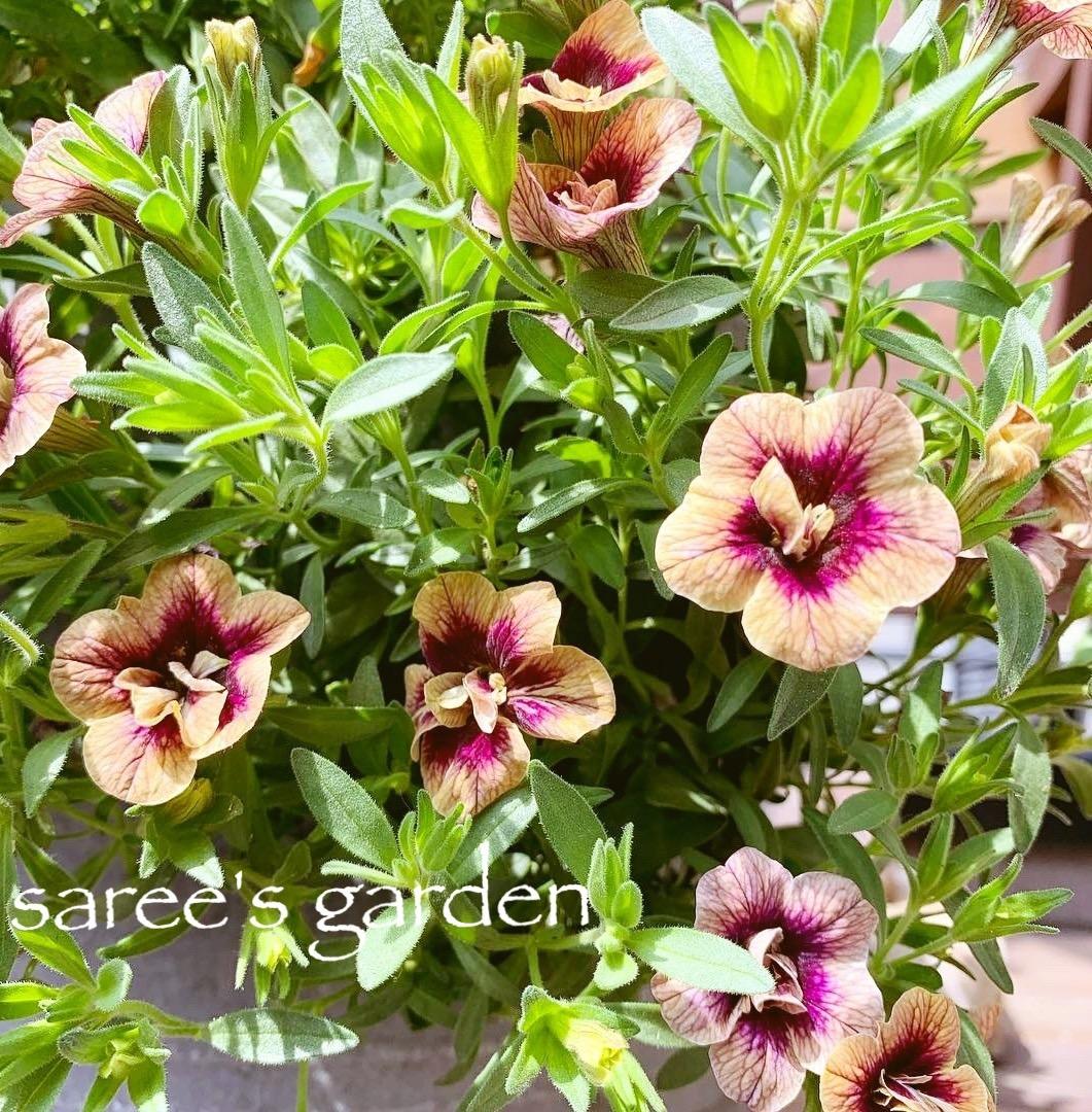 f:id:sarees:20190419130640j:plain
