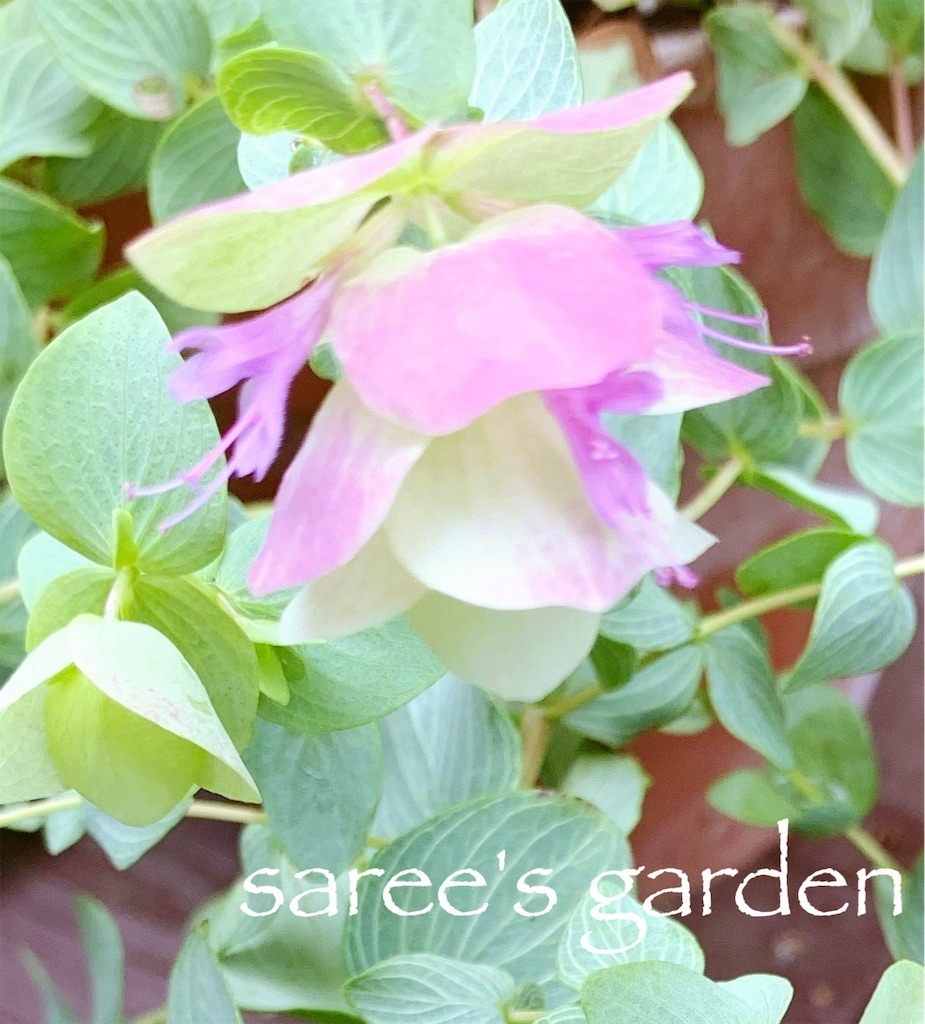 f:id:sarees:20190608123538j:image