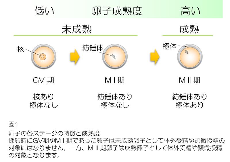 f:id:sarokatsu:20200607153531j:plain