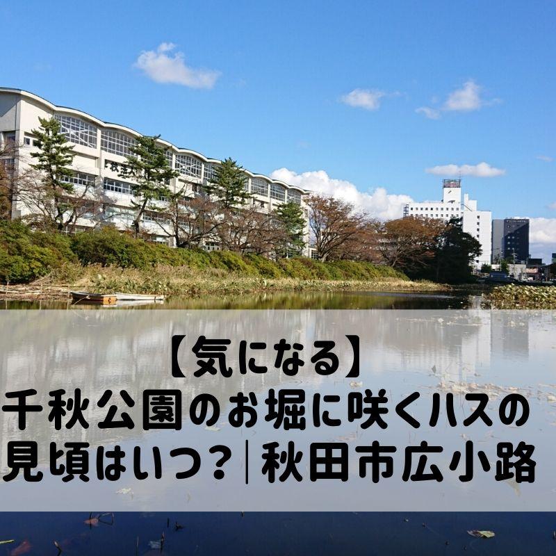千秋公園のお堀に咲くハスの見頃はいつ?