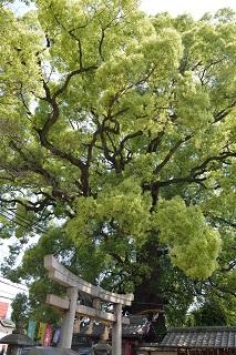 f:id:sarunokinobori:20160218212759j:plain