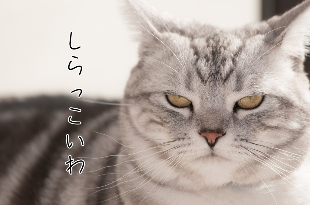 f:id:sasa-konkatsu:20190116191519j:plain