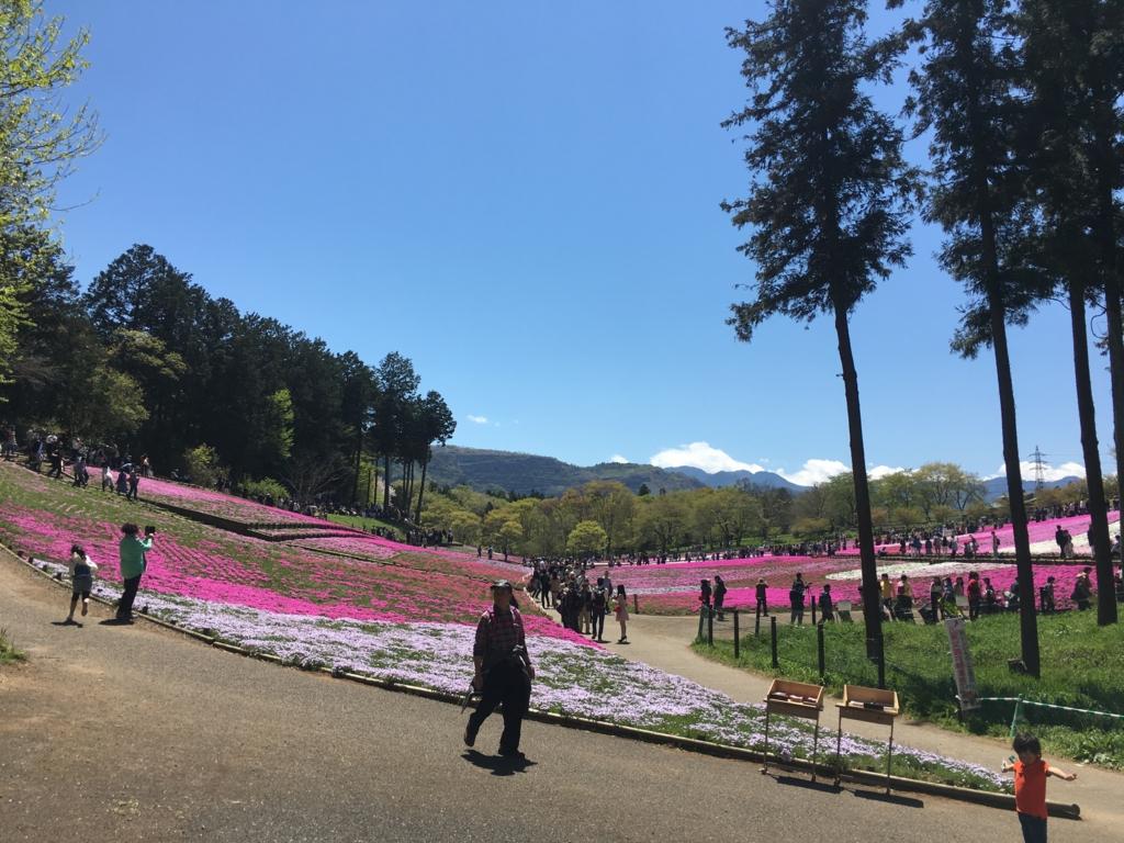 羊山公園の芝桜(入り口付近)