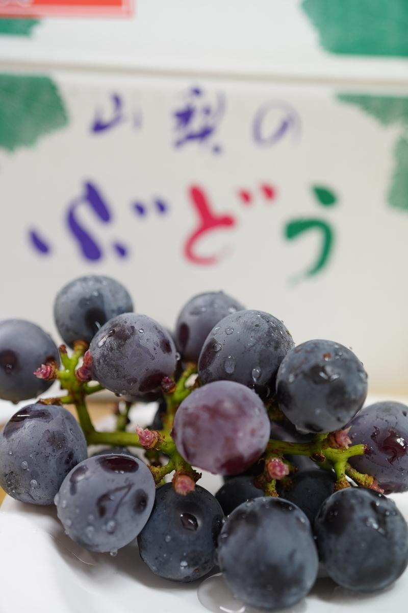 f:id:sasaki-yamada-lab:20210824163327j:plain