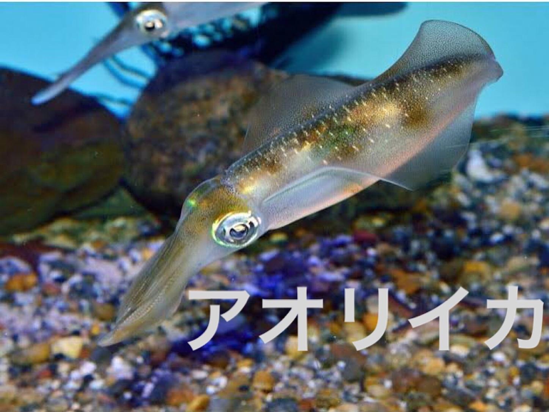 f:id:sasaki07takefumi05:20200118193220j:image