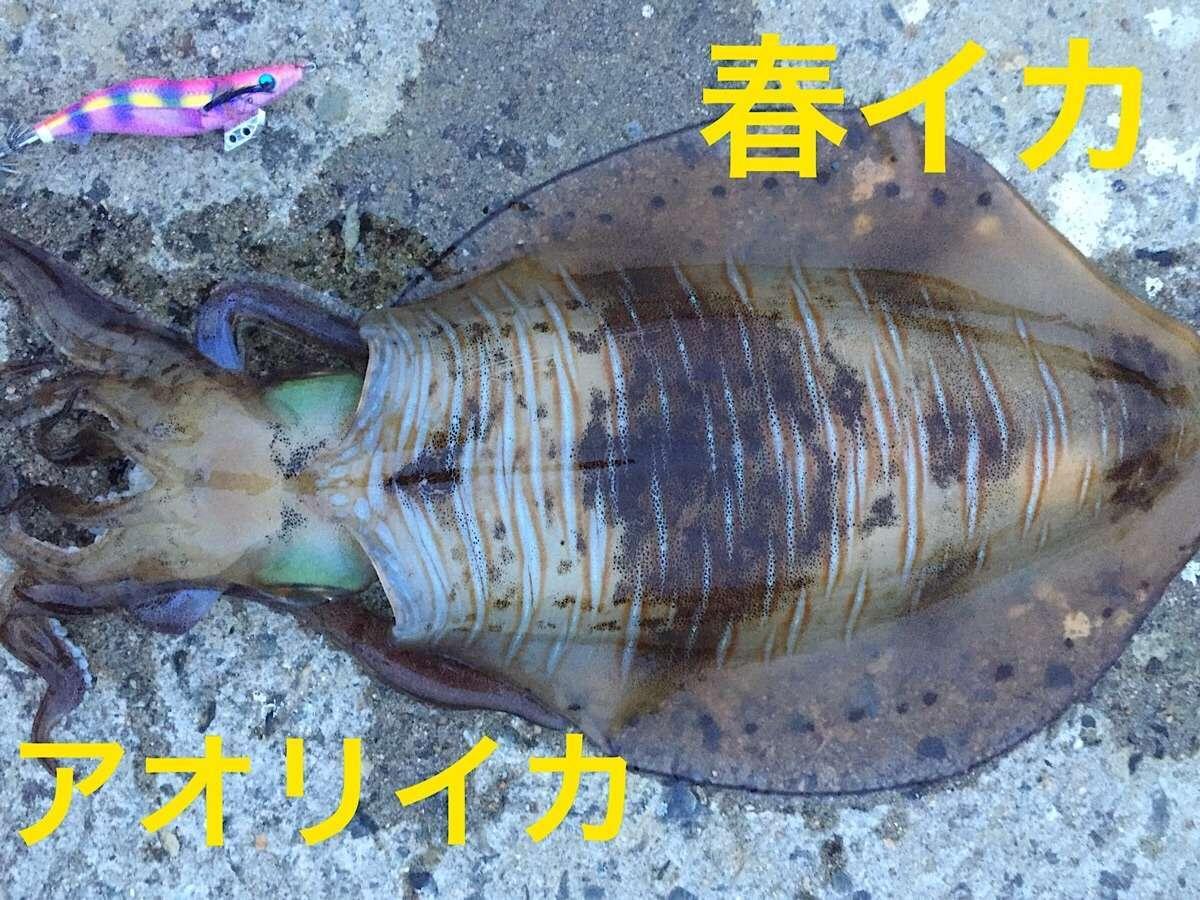 f:id:sasaki07takefumi05:20200207162837j:image
