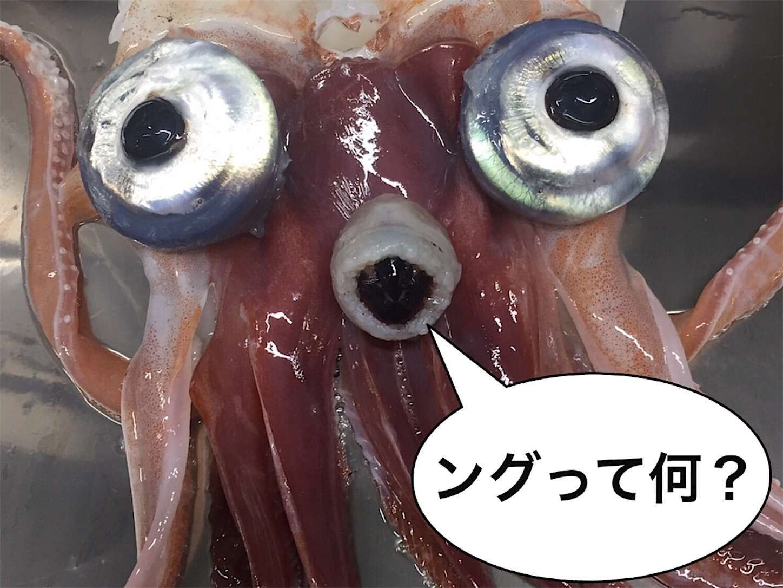 f:id:sasaki07takefumi05:20200225194303j:image