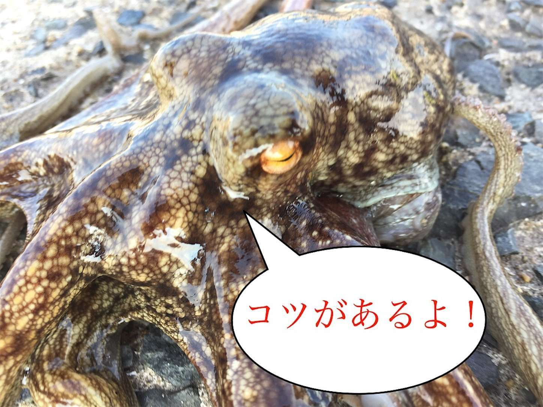 f:id:sasaki07takefumi05:20200227211143j:image