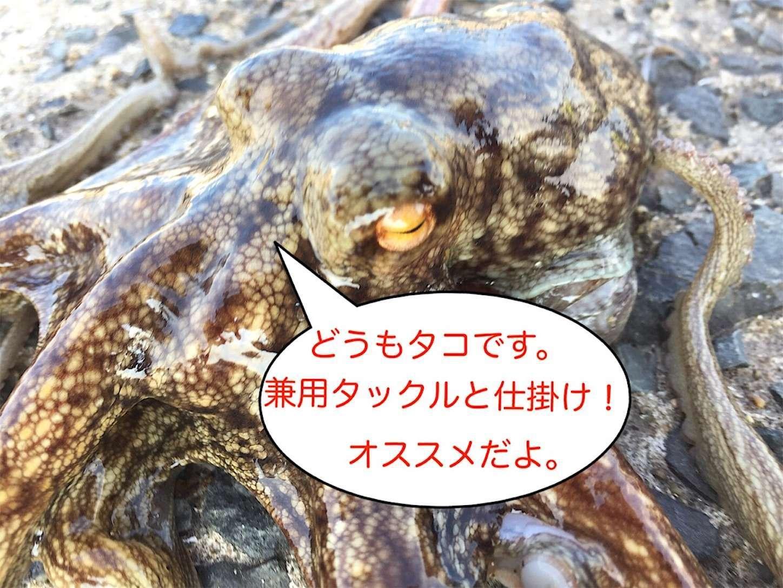 f:id:sasaki07takefumi05:20200318174955j:image