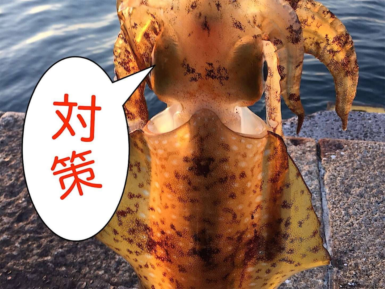 f:id:sasaki07takefumi05:20200409182841j:image