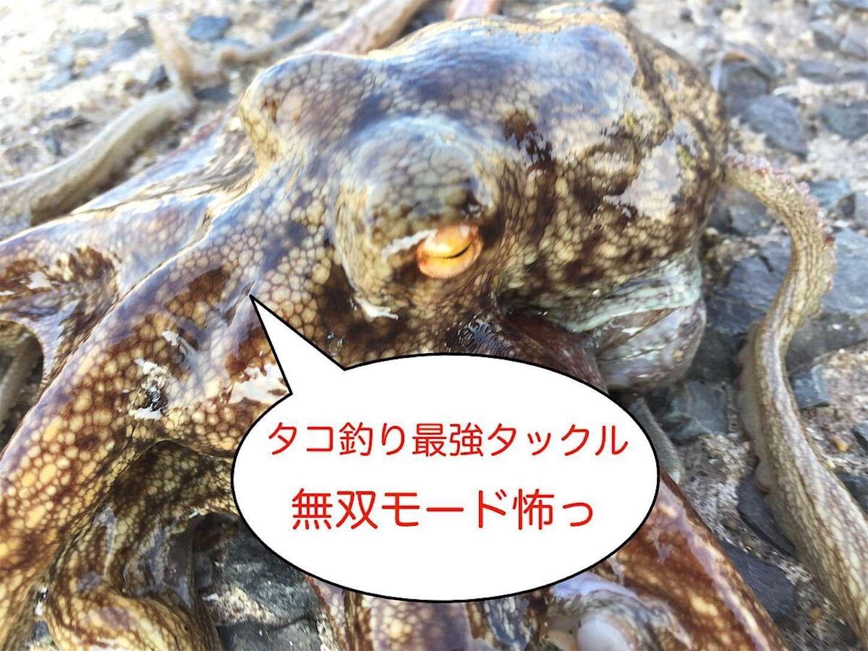 f:id:sasaki07takefumi05:20200512151927j:plain
