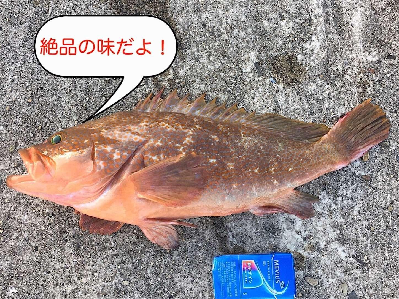 f:id:sasaki07takefumi05:20200530161759j:image