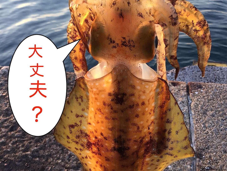 f:id:sasaki07takefumi05:20210406095011j:plain