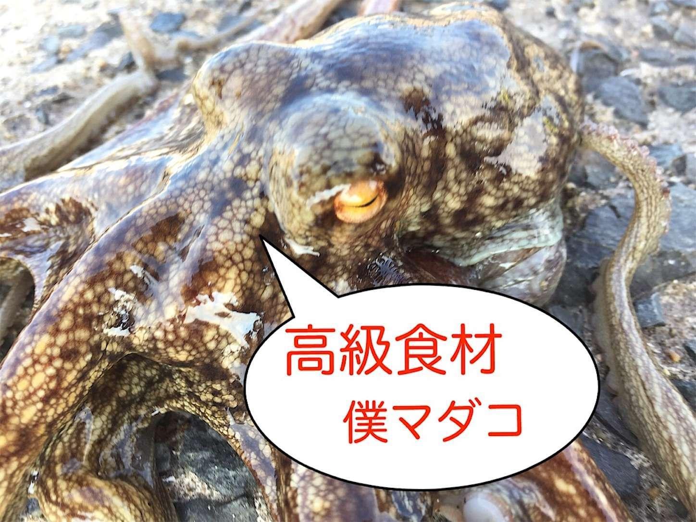f:id:sasaki07takefumi05:20210621193006j:image