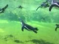 葛西水族園