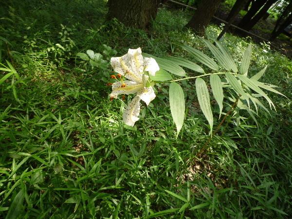 f:id:sasameyuki47:20090716134047j:image